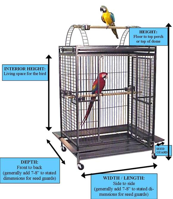 how to get a budgie back in its cage